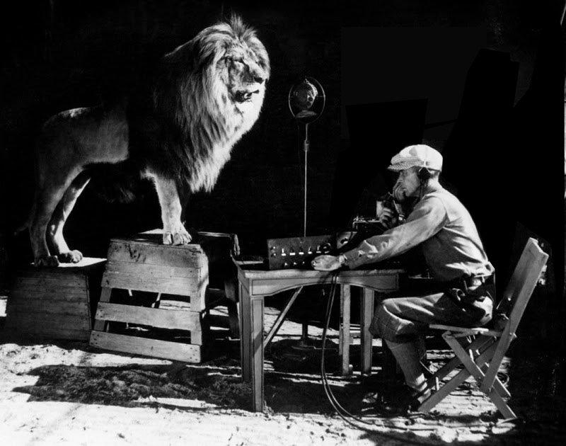 lion-800x630-q85